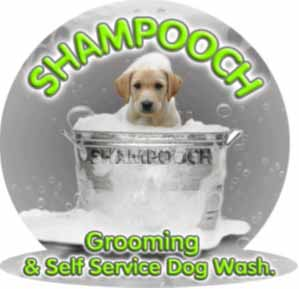 Shampooch grooming and self service dog wash open day sunday 9th august come to shampooch grooming and self service dog solutioingenieria Gallery